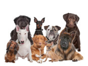 post_group_of_dogs_450x350